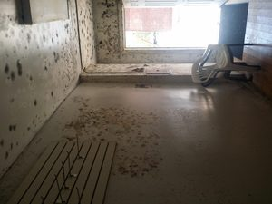 Water Damage Restoration of Back Hallway With Mold Growth